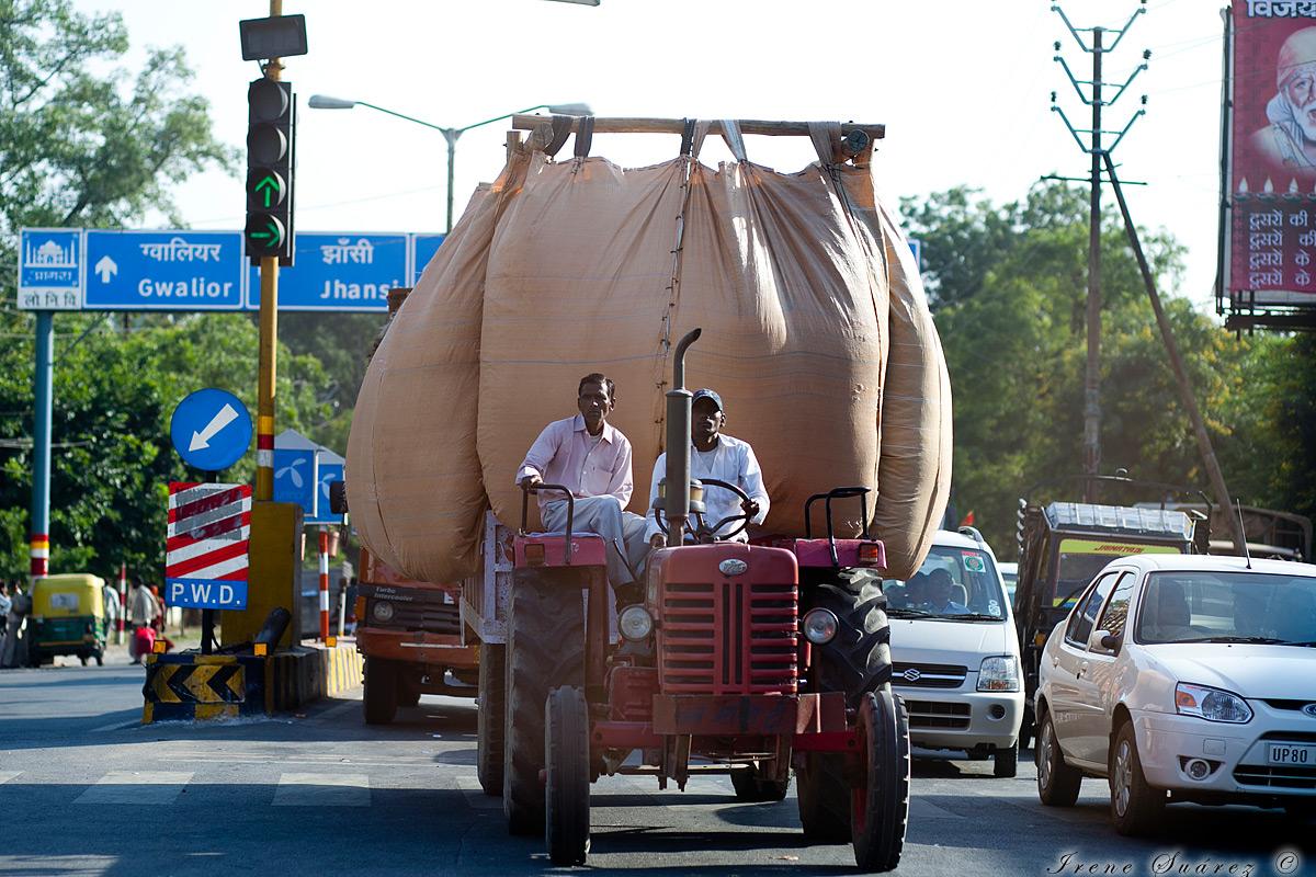 Tractor indio transportando grano